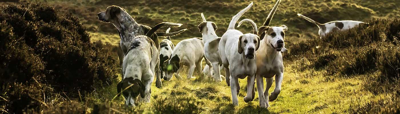 DieWaffenbrueder.de sind Hundeliebhaber und haben einen Bürohund!